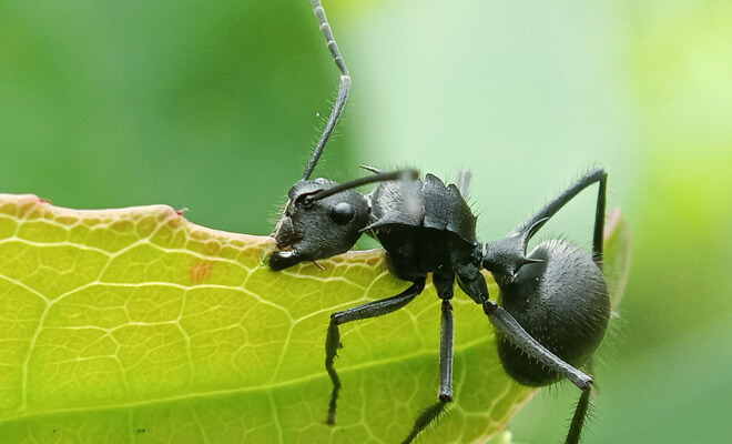 The danger of dreaming about ants: meaning of ants in dreams